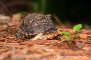 turtle_02.jpg