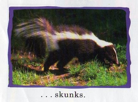 skunks001.jpg