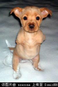 Faith.dog