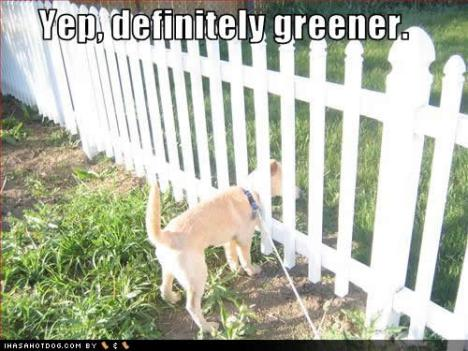 funny-dog-pictures-definitely-greener